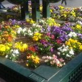 Tere jardinera en plaza del pilar