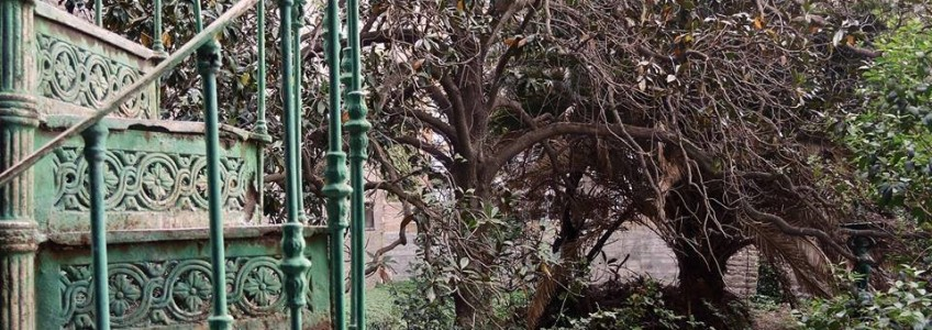 2019_07_29_Jardin san miguel foto escalera jardin